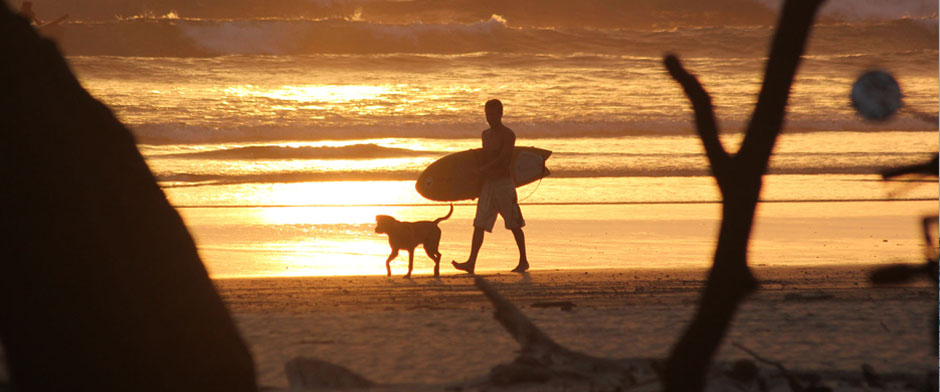 surfdog